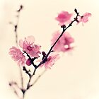 blossom by etoile