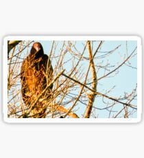Turkey Vulcher Western NC Sticker