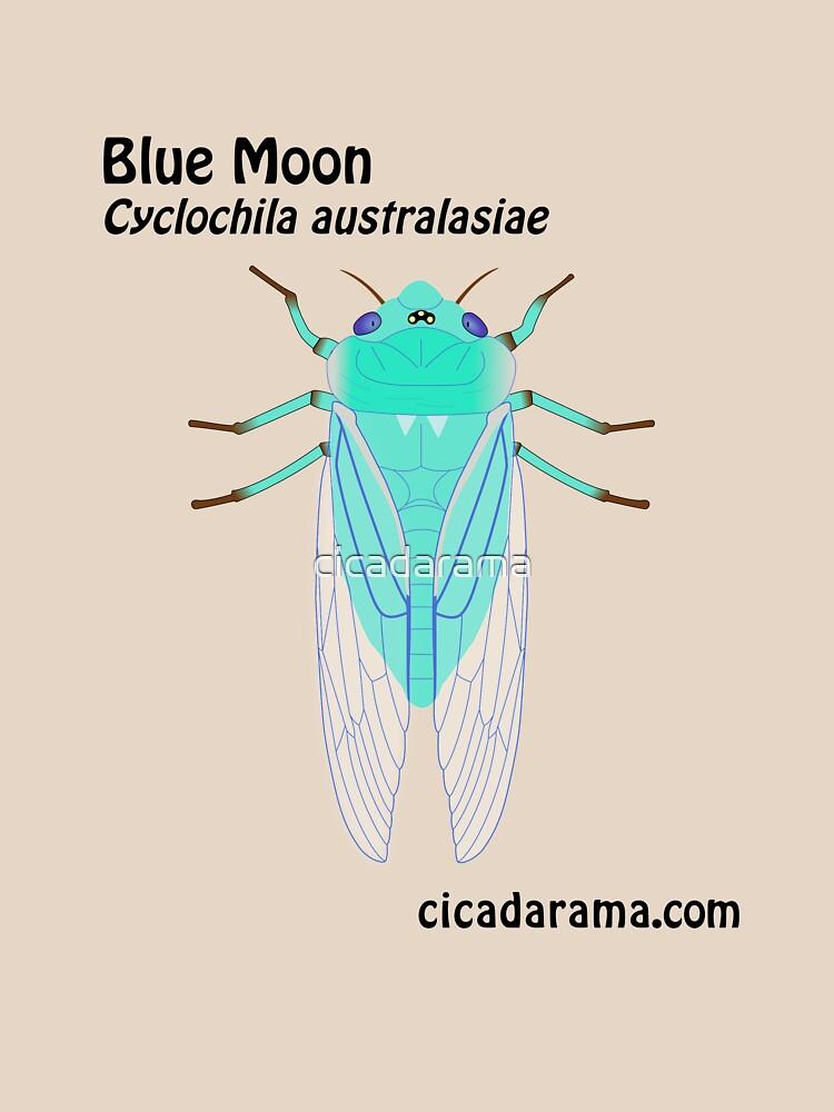 Blue Moon cicada (Cyclochila australasiae) by cicadarama