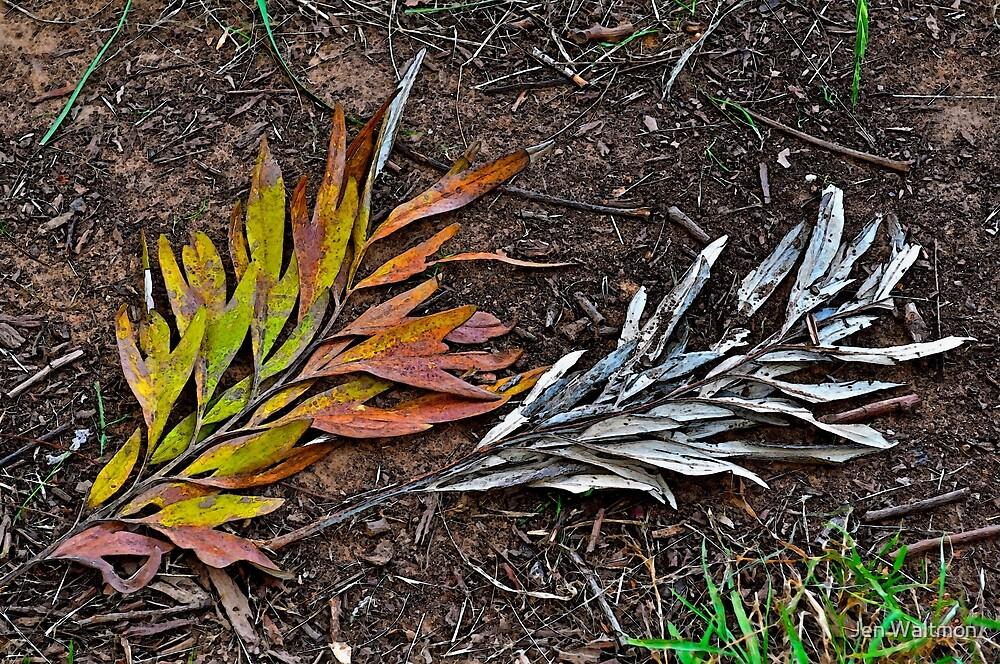 Multi-colored or monochrome? by Jen Waltmon