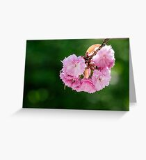 pink blossomed sakura flowers Greeting Card