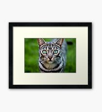 Staring Cat - The Silver Spotted Bengal  Framed Print