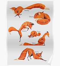 Fox poses  Poster