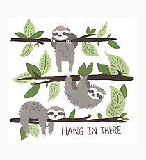 Sloth Nature Design - Hang In There Photographic Print