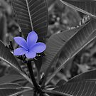The Purple Flower Amongst a Black and White Jungle by Jen Waltmon