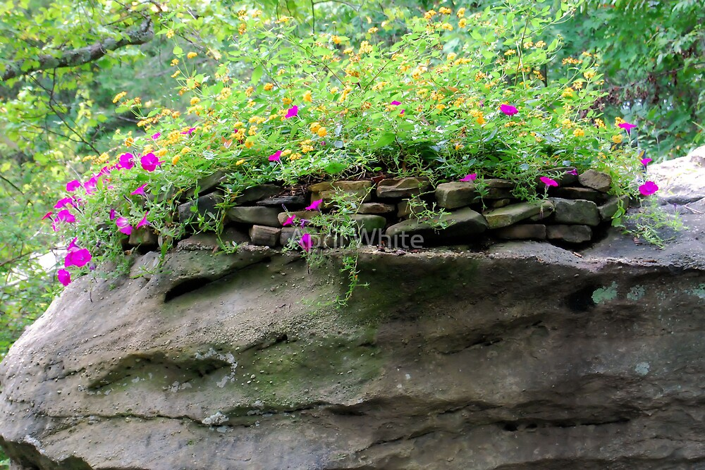 Flowers Atop Rocks by April White