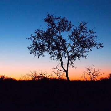Tree Silhoette at Sunset by yallmia