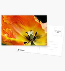 """Parkeit (Parrot) Tulip """"Professor Rontgen"""" Postcards"""