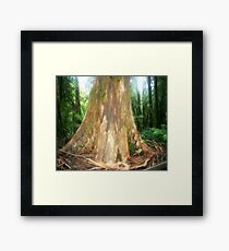 The Big Boy ( Mountain Ash Tree)  Framed Print