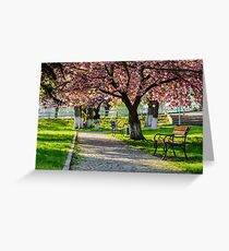 bench on the pavement in the park on a background of grass and sakura tree Greeting Card