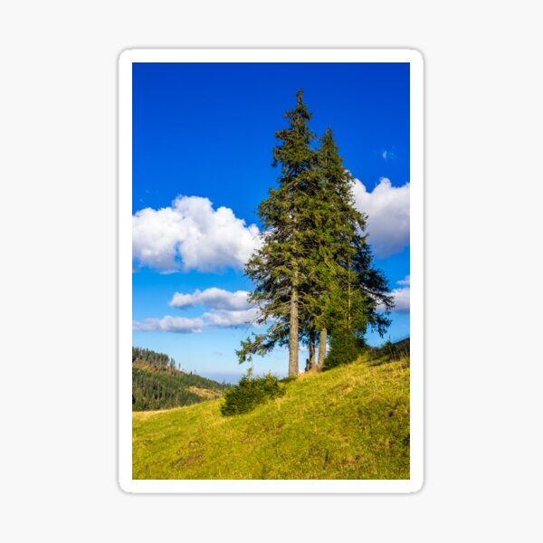evergreen tree on a mountain slope Sticker
