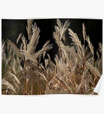 Wheat Plant Poster