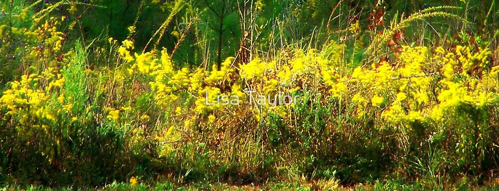 Goldenrod Fields by Lisa Taylor