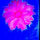 Pink Flower on Blue by rose loya