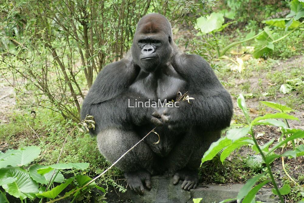 Silverback Gorilla on the Pangani Forest Exploration Trail by LindaMac