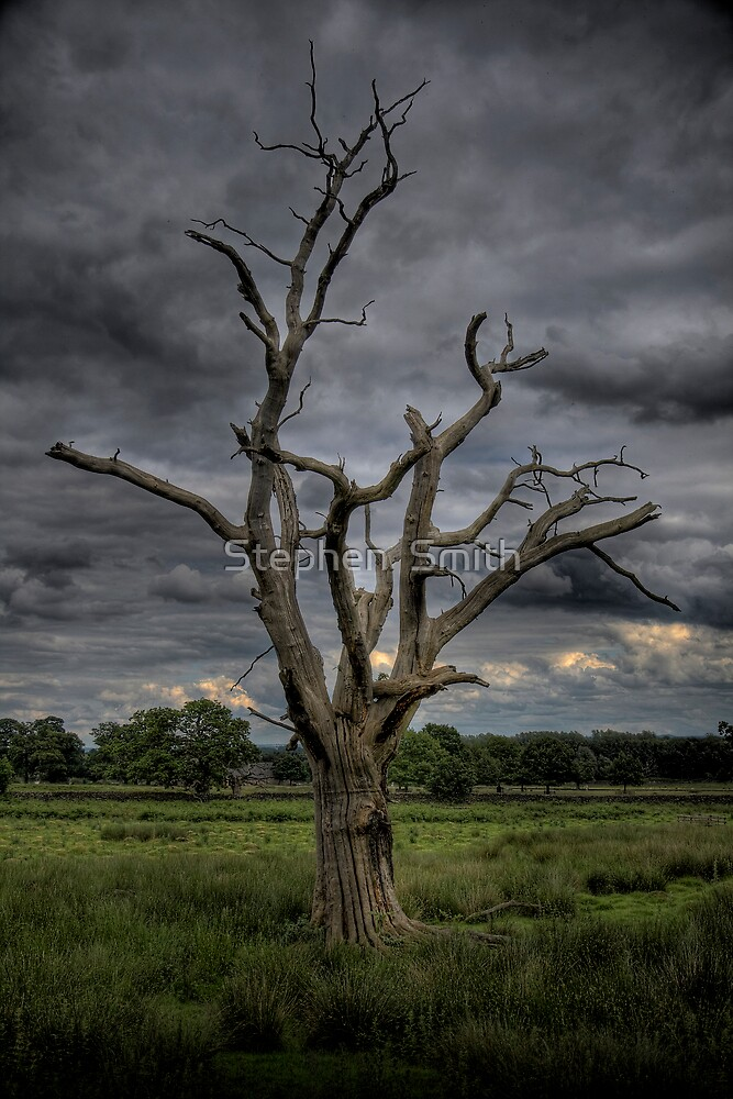 Dead wood II by Stephen  Smith