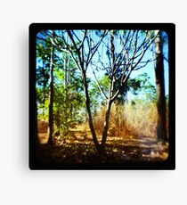 Mysterious Enchantment II Canvas Print