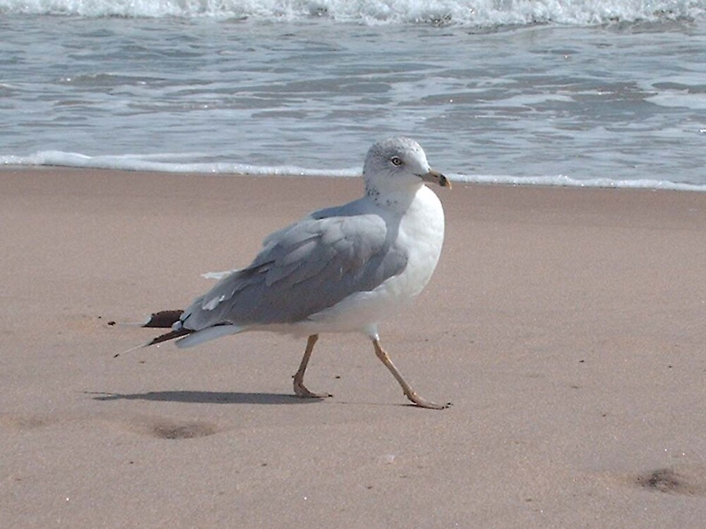 Mr. Seagull by Boo13