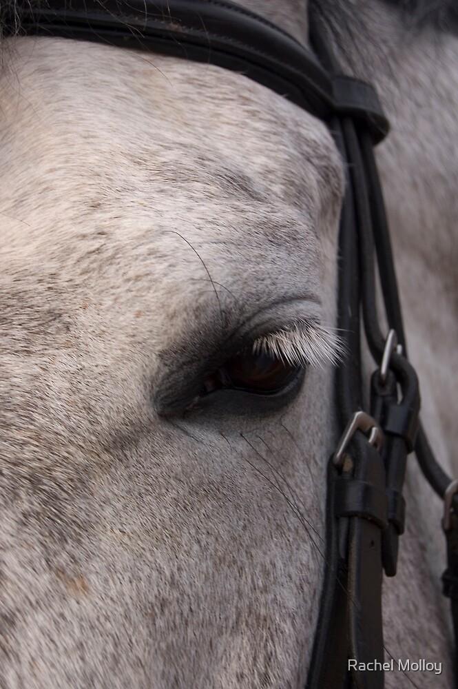 Horse's eye view by Rachel Molloy