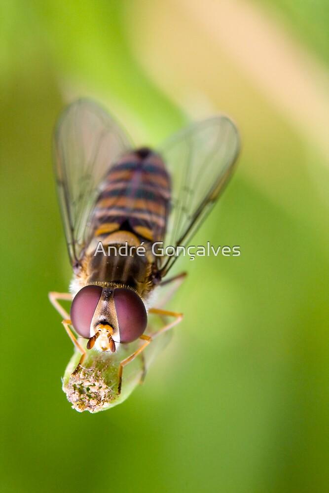 Hoverfly by André Gonçalves