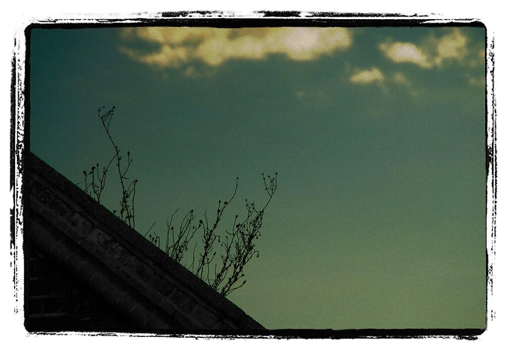 My Window View by Bojoura Stolz