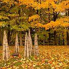 Autumn by John Velocci