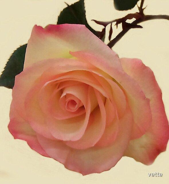 Rose Beauty by vette