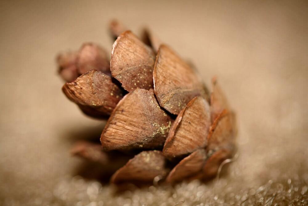 Baby Pine Cone by chrishawns