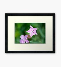 Star Flowers Framed Print