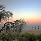 Moonshot by Asoka