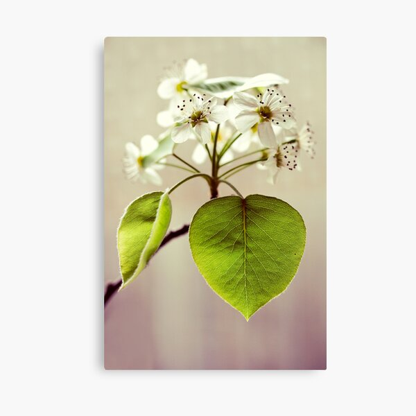 heart of the blossom. Canvas Print
