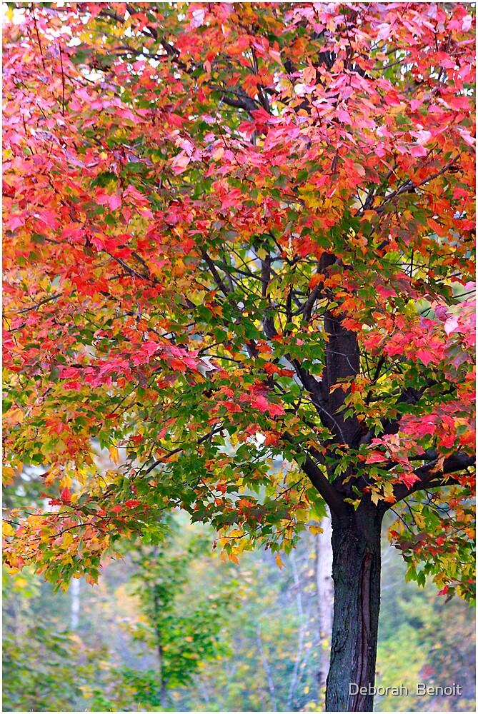 Vermont Color II by Deborah  Benoit