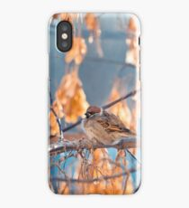 great sparrows in winter time on a branch iPhone Case/Skin