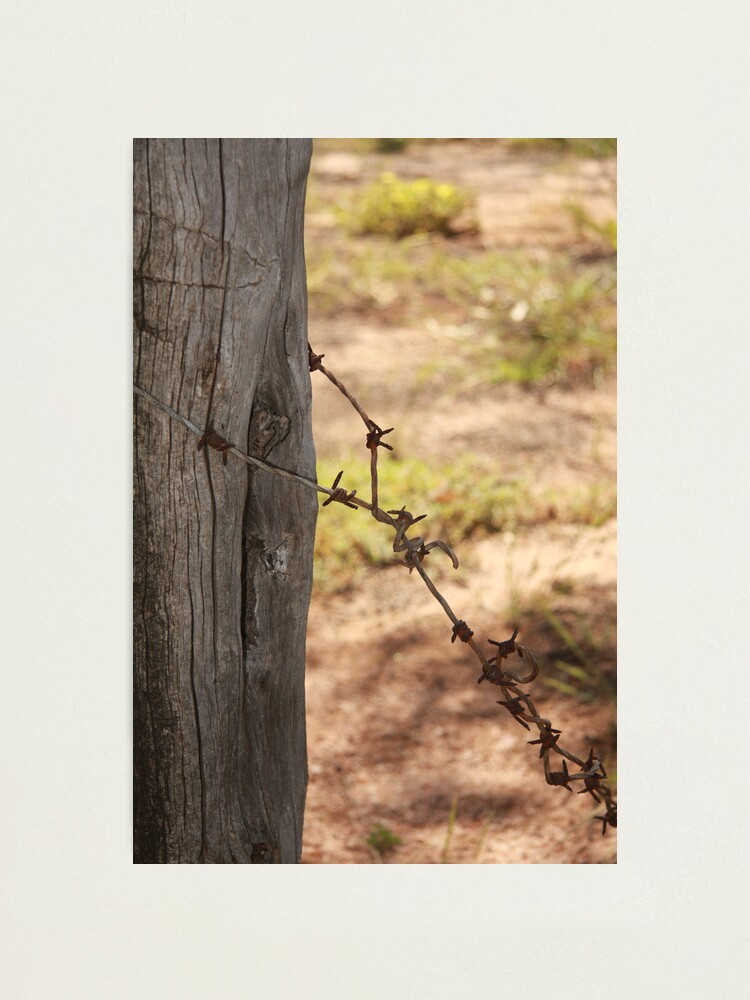 Alternate view of Old barbed wire Photographic Print