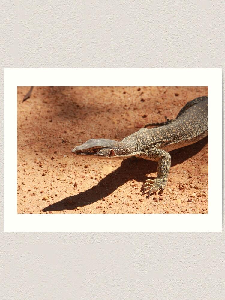Alternate view of Sand goanna – Varanus gouldi Art Print