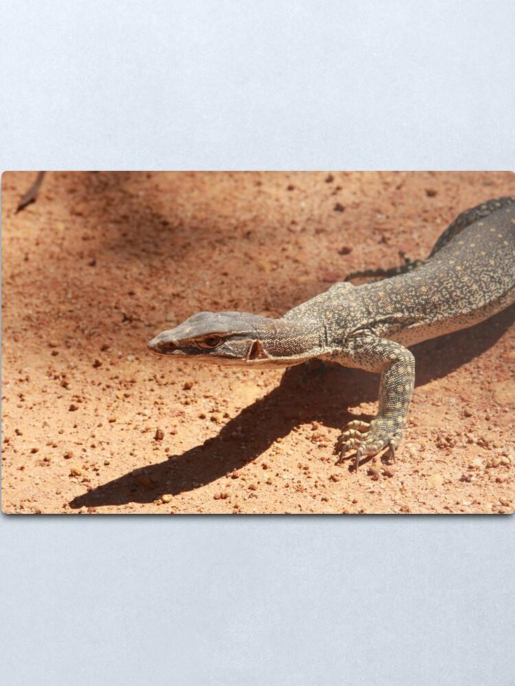 Alternate view of Sand goanna – Varanus gouldi Metal Print