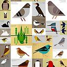 São Paulo Birds by Scott Partridge