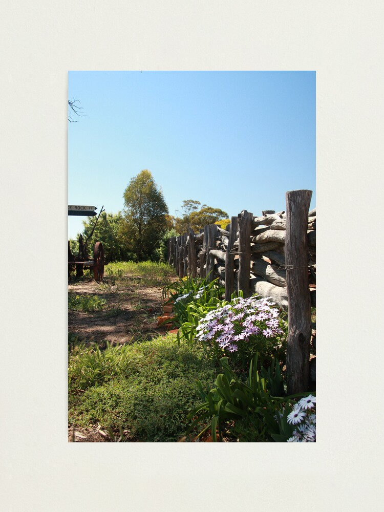 Alternate view of Flowers by the fence Photographic Print