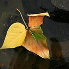 One Fallen Leaf by CarolM
