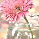 pink daisy by Lori Botelho
