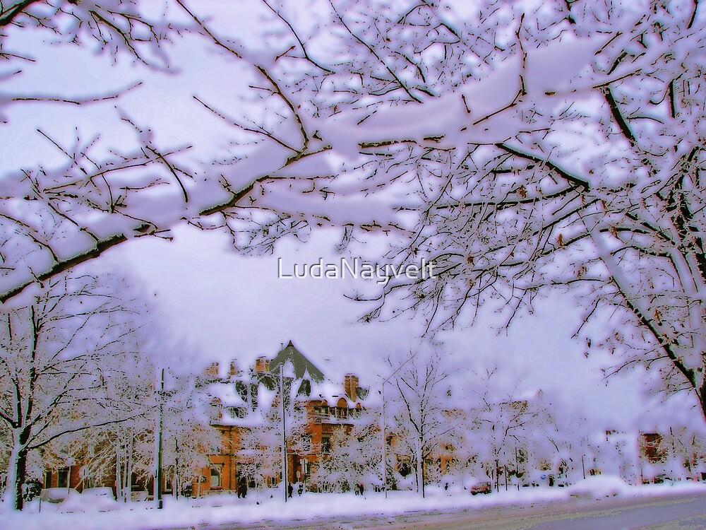 Winter in New England  by LudaNayvelt