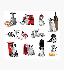 Royal Canines Photographic Print