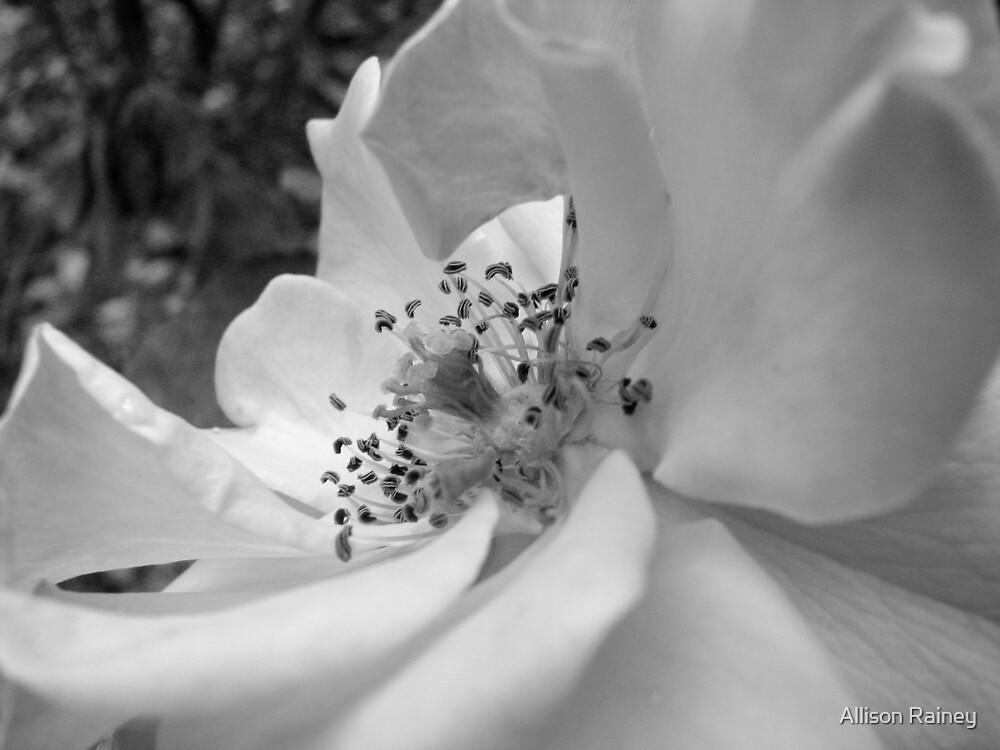 Flower in Black & White by Allison Rainey
