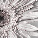 a lil pink by Lori Botelho