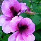Purple Flowers by Shulie1