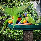Parrots Leith Park Victoria 20170707 0864  by Fred Mitchell
