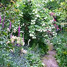Down the garden path by Susan Moss