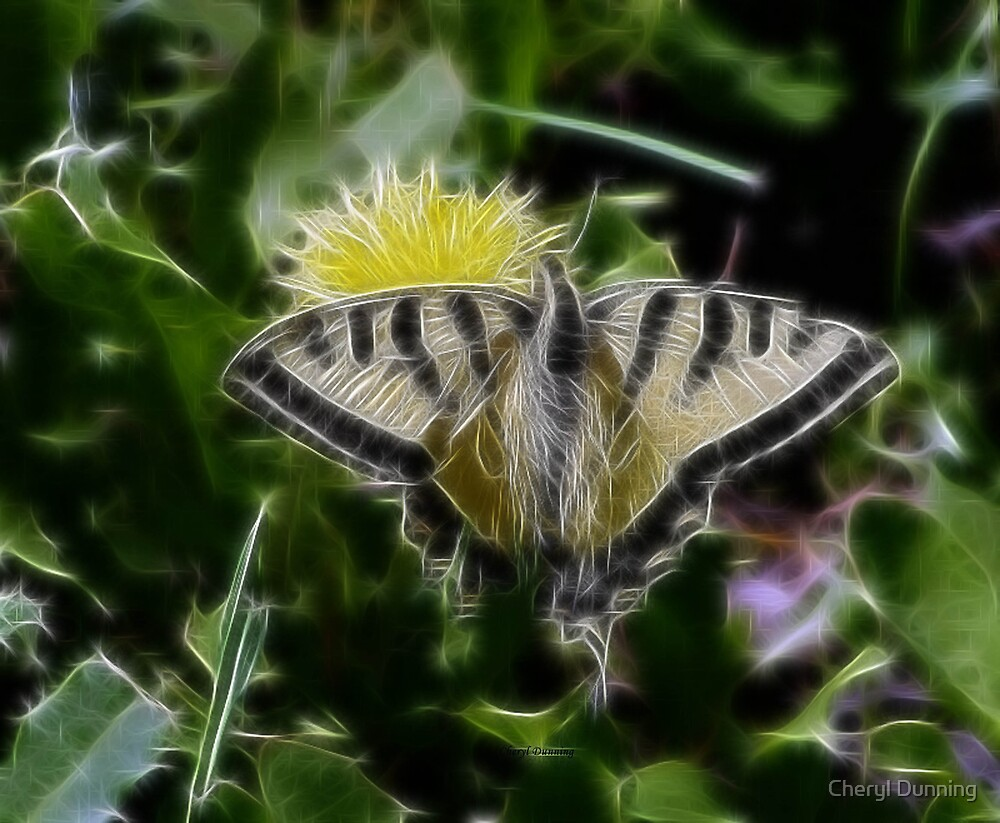 butterfly dreams by Cheryl Dunning