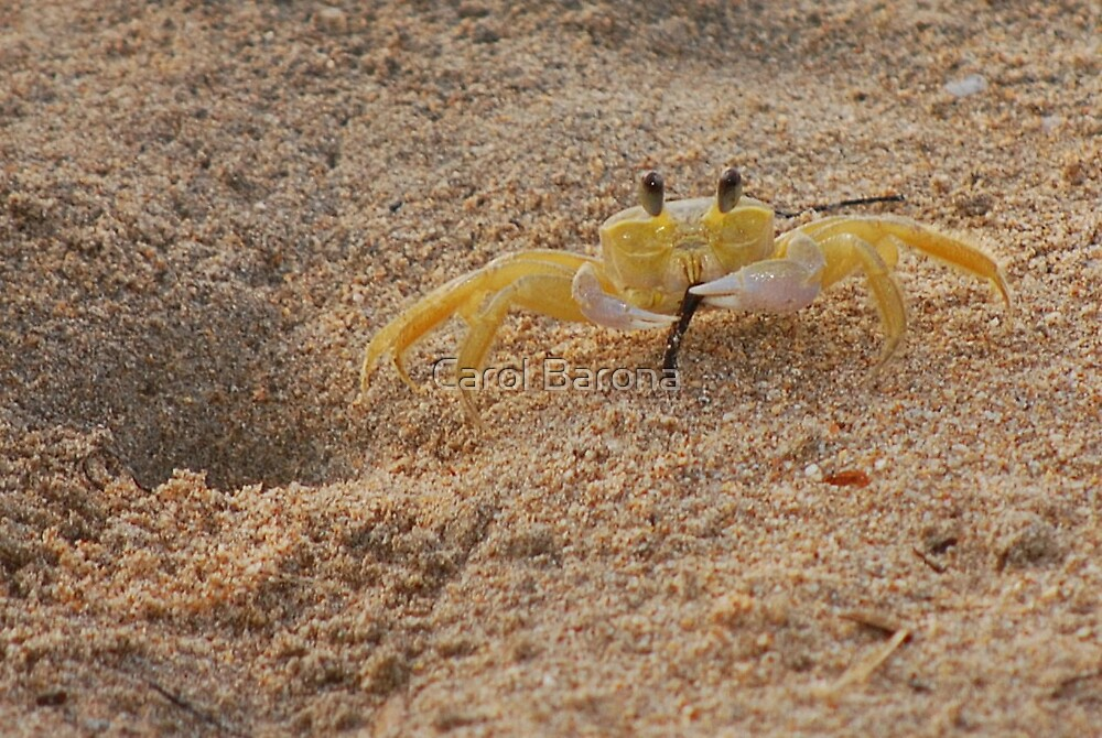 Never a Crabby Day! by Carol Barona