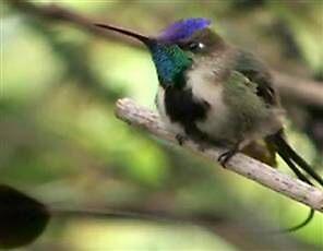 rare birds by purelife